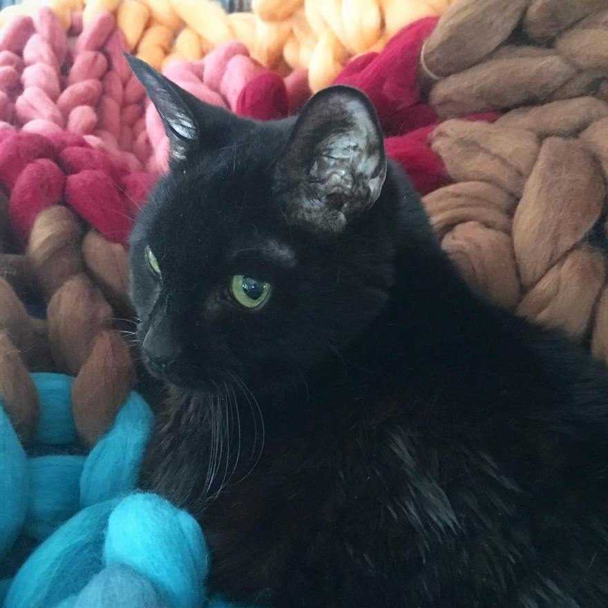 rudy arm knitted blanket